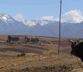 Altiplano Populaire rondreizen Peru