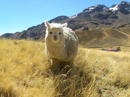 19 daagse rondreis Peru Bolivia