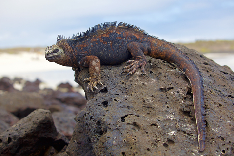 26 daagse rondreis peru met galapagos eilanden