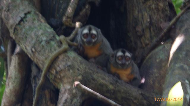 Peruaanse Regenwoud