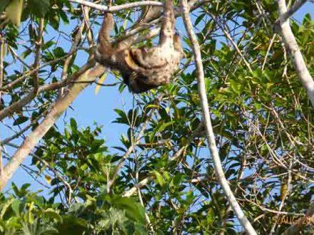 14 daagse rondreis Peru met luiaard in de Amazone