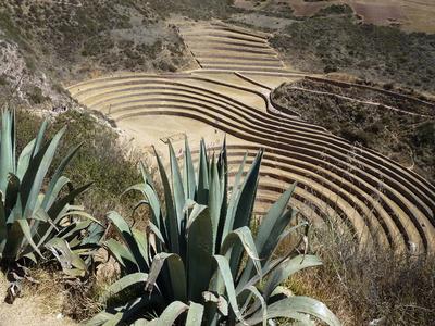 Maras Moray tijdens rondreis peru bolivia 4 weken