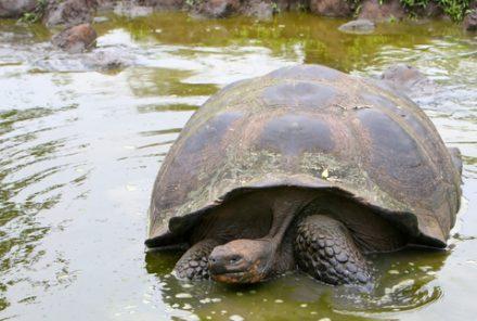 De Galapagos eilanden