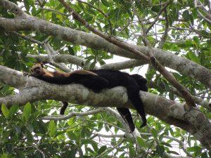 Aap tijdens Rondreis Peru 4 weken Puerto Maldonado jungle