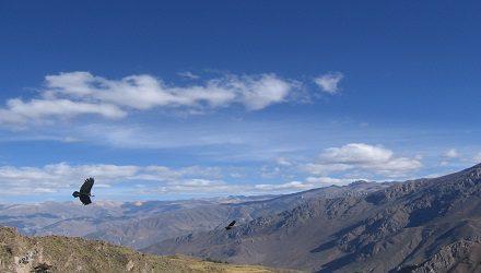 Colca Canyon tour 2 dagen
