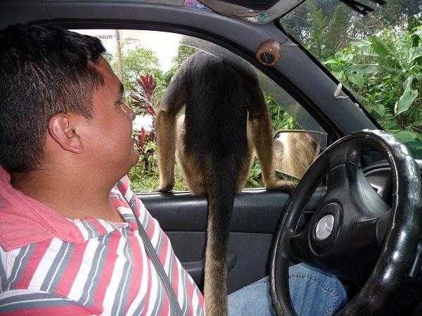 Rurrenbaque pampus Aap in auto