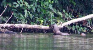 Otters innotawa
